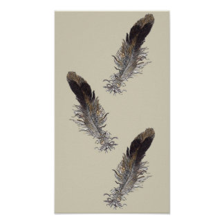 Small Bird Feathers Poster
