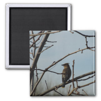 Small Bird in Bare Tree in Winter Magnet