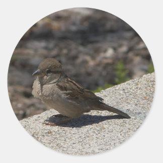 Small Bird In San Diego Sticker