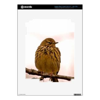Small Bird On Tree Branch Photo iPad 3 Decals