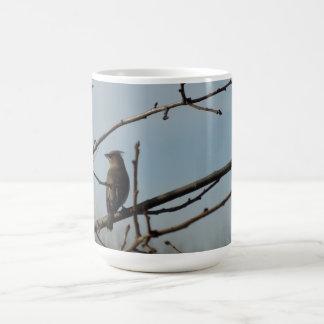 Small Bird on Tree Limb in Winter Classic White Coffee Mug