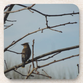 Small Bird on Tree Limb in Winter Coaster