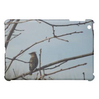 Small Bird on Tree Limb in Winter iPad Mini Covers