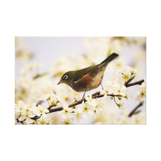 Small Bird Tree Spring Blossoms Nature Canvas Print
