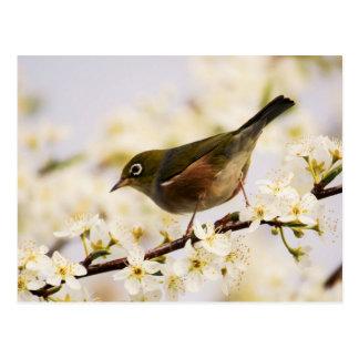 Small Bird Tree Spring Blossoms Nature Postcard