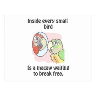 Small birds postcard