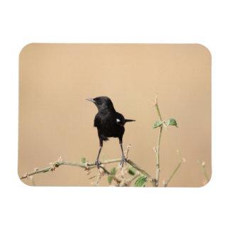 Small Black Bird on Bush Branch Magnet