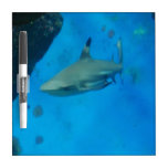 Small Black Tipped Shark Dry Erase Boards