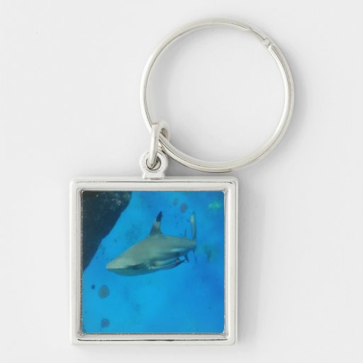 Small Black Tipped Shark Key Chains