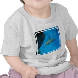 Small Black Tipped Shark Tshirts