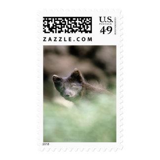Small Black Wolf Postage