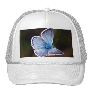 Small Blue Butterfly Baseball Hat