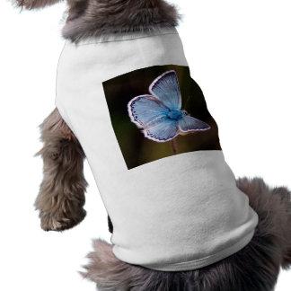 Small Blue Butterfly Dog Shirt