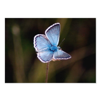 Small Blue Butterfly Invitation