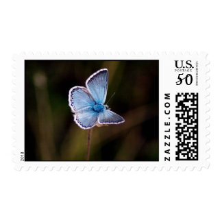 Small Blue Butterfly Photo Postage Stamp