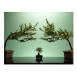 Small bonsai tree between two large bonsai trees postcard