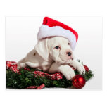 small boxer puppy/little boxers puppy Christmas Postcards