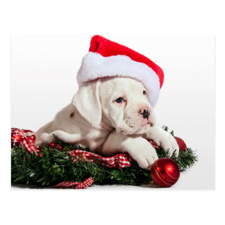 small boxer puppy/little boxers puppy Christmas Postcard