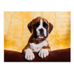 small boxer puppy/little boxers puppy post card