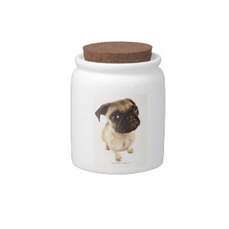 Small breed of dog with short muzzled face. candy jars