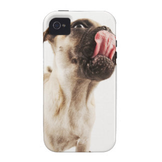 Small Breed of Dog with Short Muzzled Face Case-Mate iPhone 4 Covers