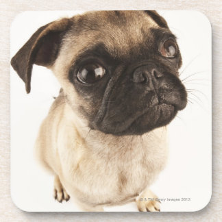 Small breed of dog with short muzzled face. coasters