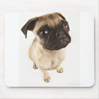 Small breed of dog with short muzzled face. mouse pad