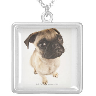 Small breed of dog with short muzzled face. silver plated necklace