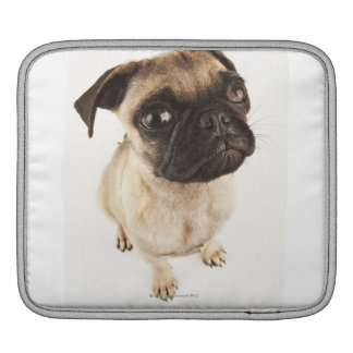 Small breed of dog with short muzzled face. sleeves for iPads