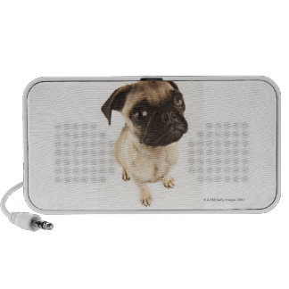 Small breed of dog with short muzzled face. speaker
