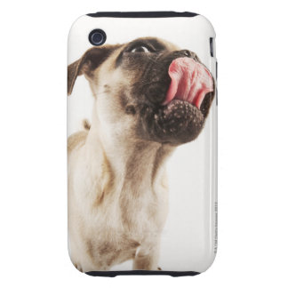 Small Breed of Dog with Short Muzzled Face Tough iPhone 3 Case