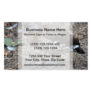 small brown and white duck walking bird business card templates