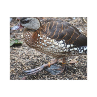 small brown and white duck walking bird canvas print