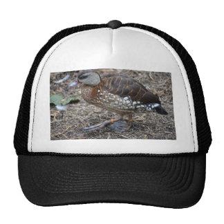 small brown and white duck walking bird trucker hat