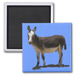 Small Burro on Blue - Donkey & Animal Lovers 2 Inch Square Magnet