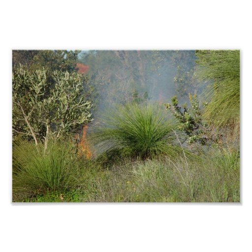 Small Bushfire In Candlewood At Western Australia Print