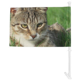 small cat on a green spring meadow car flag