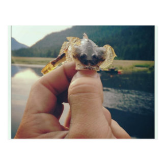 Small Catch Postcard