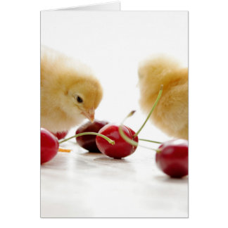 Small chickens and blows cherries card