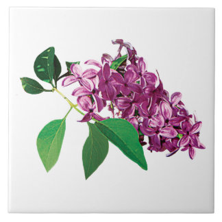 Small Cluster of Pink Lilacs Ceramic Tile