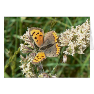 Small Copper Butterfly Card