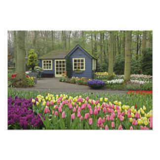 Small cottage flower shop, Keukenhof Gardens, Photo Print