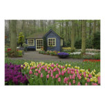 Small cottage flower shop, Keukenhof Gardens, Poster