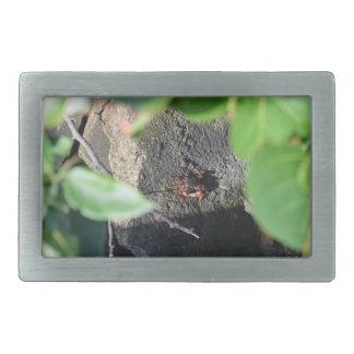small crab sea grape frame on rock animal belt buckle