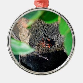small crab sea grape frame on rock animal metal ornament