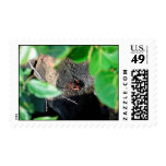 small crab sea grape frame on rock animal postage