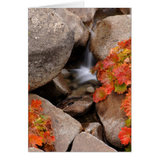 Small creek in autumn, California Card