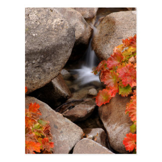 Small creek in autumn, California Postcard