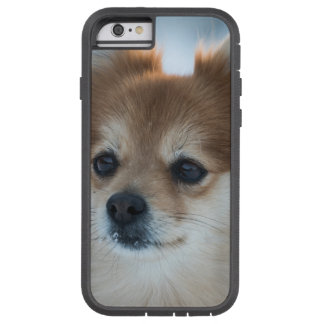 Small dog close-up tough xtreme iPhone 6 case