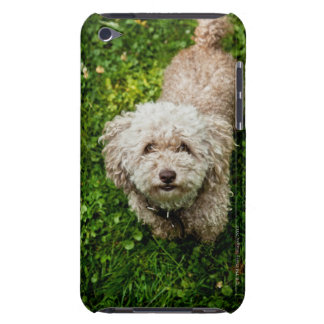 Small dog looking up at camera barely there iPod cover